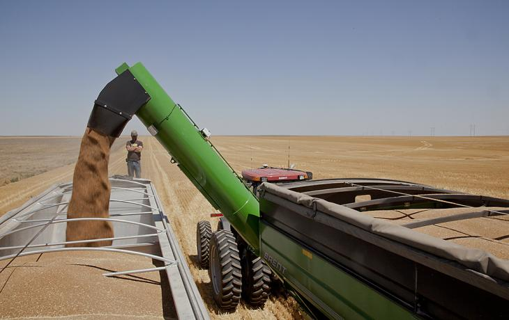 Transferring wheat from hopper to truck, Kiowa County, Kansas, June 2012 by Larry Schwarm