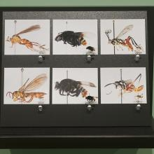 exhibition image from 39 Trails: Research in the Peruvian Amazon