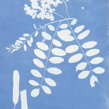 "<a href=""https://spencerartapps.ku.edu/collection-search#/object/18897"" target=""_blank""><i>Robinia pseud-acacia America</i> by Anna Atkins</a>"