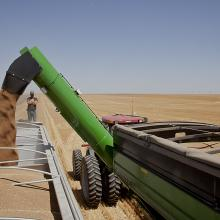 <a href='http://collection.spencerart.ku.edu/eMuseumPlus?service=ExternalInterface&module=collection&objectId=58332&viewType=detailView' target='_blank'><i>Transferring wheat from hopper to truck, Kiowa County, Kansas, June 2012</i> by Larry Schwarm</a>