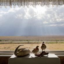 <a href='http://collection.spencerart.ku.edu/eMuseumPlus?service=ExternalInterface&module=collection&objectId=58347&viewType=detailView' target='_blank'><i>Armadillo and quail in window, Kiowa County, Kansas, August 2011</i> by Larry Schwarm</a>